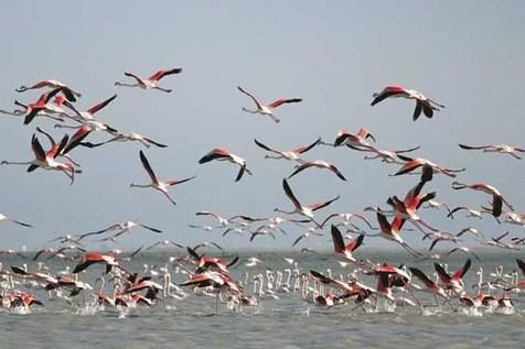 ۲۰ اردیبهشت روز جهانی پرندگان مهاجر