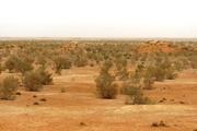 ۱۷ هزار هکتار از بیابانهای گرمسار تاغکاری شد
