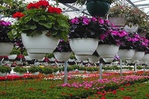 خودکفایی سازمان پارکهای تبریز در تولید مجموعهای از گلهای سازگار با اقلیم منطقه