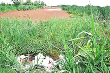 هشدار سازمان محیط زیست درباره تخریب تالاب انزلی