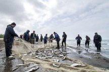 کاهش 30 درصدی صید ماهی در کیاشهر