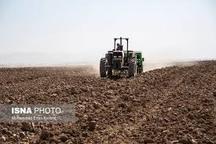 300 هزار هکتار از اراضی اردبیل به زیر کشت گندم رفته است