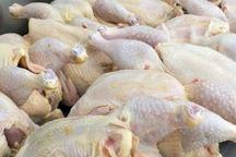 عرضه مرغ به قیمت 108 هزار ریال در خراسان رضوی آغاز شد