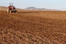 کشت پاییزه در 10 هزار هکتار از اراضی چرام آغاز شد