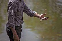 ماهیان گرفتار در رودخانه زهره نجات یافتند