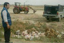 635 کیلوگرم گوشت و آلایش مرغ فاسد در گنبد معدوم شد