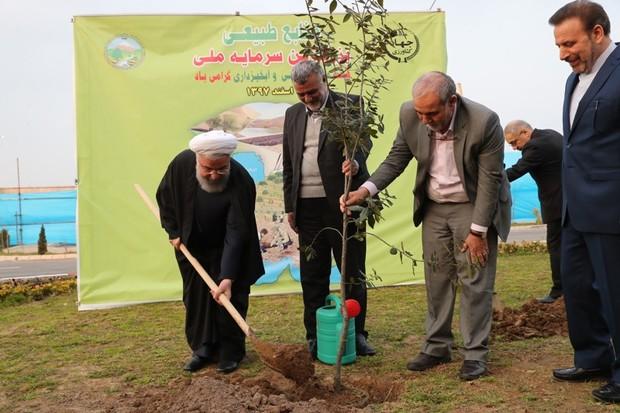 کاشت درخت توسط رئیس جمهوری در رشت