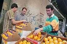 ذخیره سازی 6 هزار تن میوه ویژه نوروز در خراسان رضوی