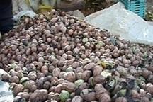 محکومیت قاچاقچی گردو و لیمو خشک در خوزستان