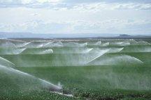 12هزارهکتاراراضی کشاورزی استان به آبیاری نوین تجهیزمی شود