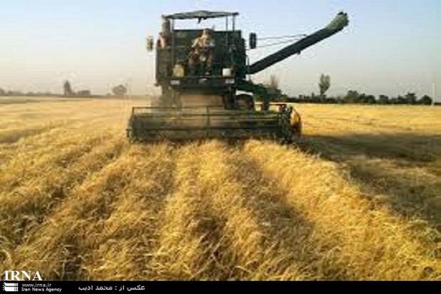 آذربایجان غربی رتبه ششم تولید گندم کشور را دارد