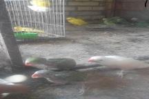 کشف 41 قطعه پرنده وحشی در شهرستان نهبندان