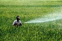 بارش های بهاری80 هزارهکتارمزارع دیم کهگیلویه و بویراحمد را نجات داد