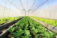 2 واحد گلخانه ای در نمین افتتاح شد