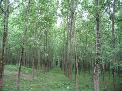 ورود گشت های حفاظتی جهاد کشاورزی به طرح تفنس جنگل در مازندران