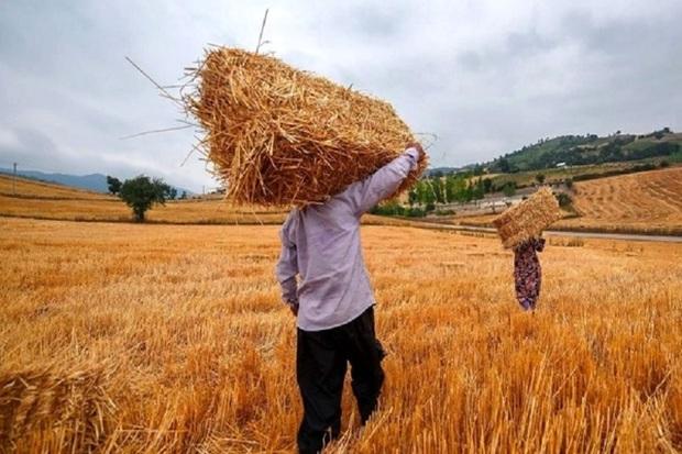 تعیین نرخ پایین برای خرید تضمینی گندم به قاچاق منجر می شود