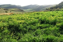 بهره برداران منابع طبیعی می توانند مراتع خود را بیمه کنند