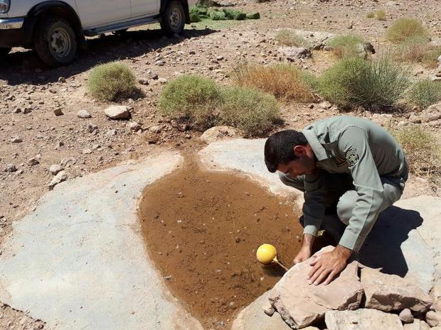 40 درصد چشمه های حیات وحش نهبندان خشک شد