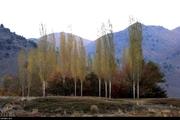 آتش سوزی در منابع طبیعی جنوب کرمان 90 درصد کاهش یافت