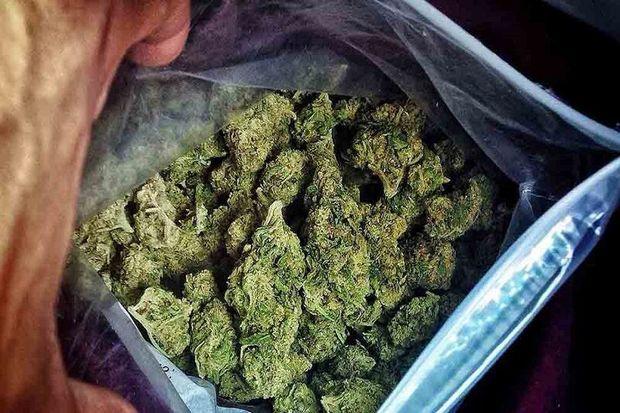 ۴۵۰ کیلوگرم ماده مخدر «گُل» در بوکان کشف شد