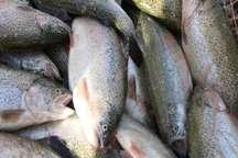 ماهی قزل آلا از اصفهان  به خارج از کشور صادر شد