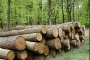 قاچاق چوب، تجارت تلخ زندگی
