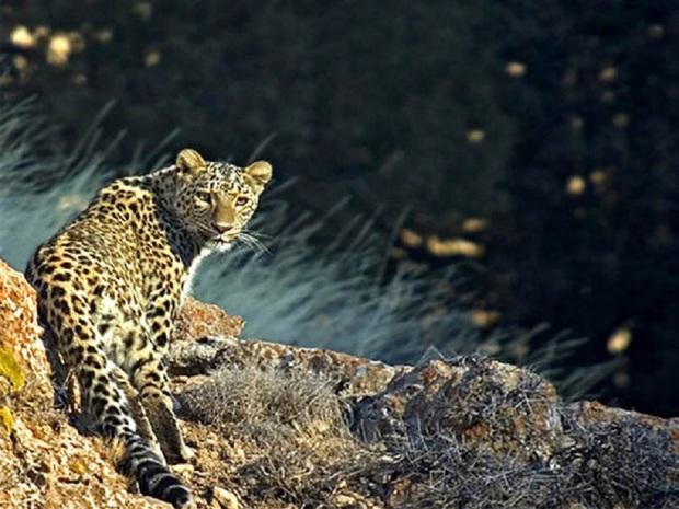 تیم پایش سلامت گونه های جانوری در پارک ملی تندوره تشکیل شد