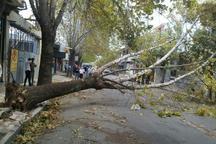 باد شدید به تاسیسات آب و برق و باغ های تالش خسارت وارد کرد