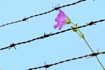 2 زندانی همدانی با کمک خانواده شهید آزاد شدند
