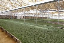 چهار طرح کشاورزی در رفسنجان و انار افتتاح شد