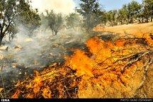 سه هکتار از جنگل های گیلانغرب در آتش سوخت