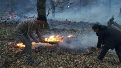 آتش به دامن جنگل های  اندیمشک افتاد