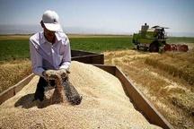 افزایش سه برابری درآمد کشاورزان در دولت یازدهم