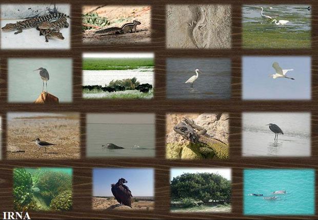 بازدید از موزه های تاریخ طبیعی سیستان و بلوچستان رایگان بود