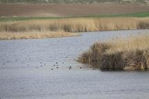 تالاب های مهاباد سالانه 27.5 میلیون مترمکعب نیاز آبی دارد