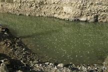 هزاران ماهی گرفتار شده در رودخانه بشار یاسوج نجات یافتند