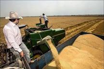 گندمکاران دره شهری 25 هزار تن محصول برداشت می کنند