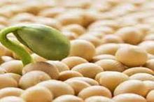 تولید بیش از 39 هزار تن دانه سویا در استان اردبیل