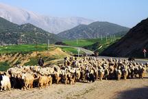 کوچ زودهنگام عشایر چهارمحال و بختیاری ممنوع است