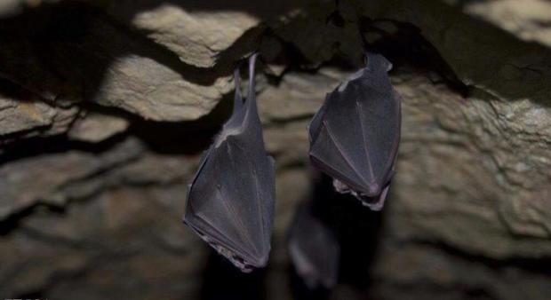 تجارت مجازی دروغین بلای جان خفاشها