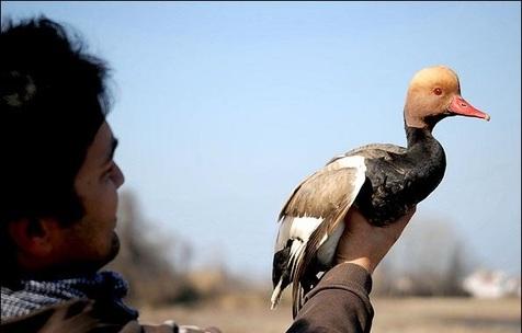چرا بازار پرنده فروشان در فریدونکنار تعطیل نمی شود؟