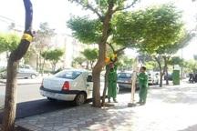 اجرای طرح پایش آفت درختان در جنوب تهران  آغاز شد