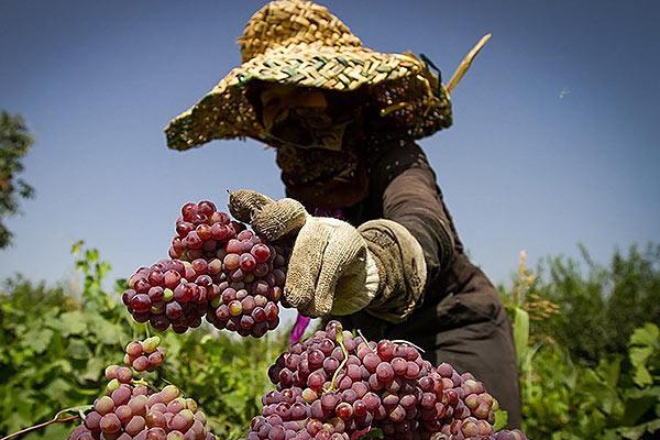 ضرورت استفاده از وسایل حفاظتی در مزارع جهت پیشگیری از سرطان