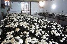 316 کشاورز قزوینی تسهیلات رونق تولید گرفتند