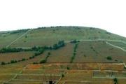 بیش از 146 هکتار اراضی منابع طبیعی مازندران به بیت المال بازگردانده شد