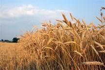 تولیدات کشاورزی آذربایجان شرقی 5 درصد افزایش می یابد