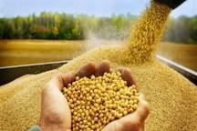 صنعت بذر کشاورزی مورد غفلت قرار گرفته است