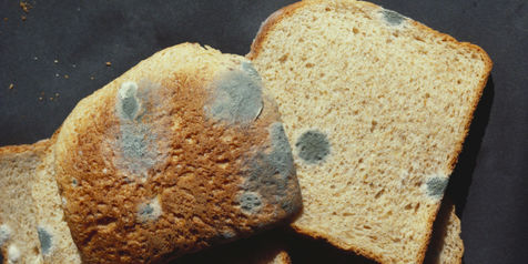 راه های جلوگیری از کپک زدن مواد غذایی