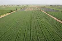 34 هزار هکتار از اراضی کشاورزی کشور رفع تداخل شد