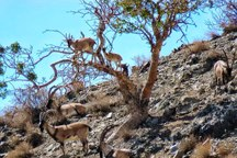 آمار 4 گونه حیات وحش در پارک ملی بختگان 50 درصد افزایش یافت